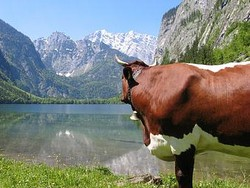Singlebörse berchtesgadener land [PUNIQRANDLINE-(au-dating-names.txt) 52